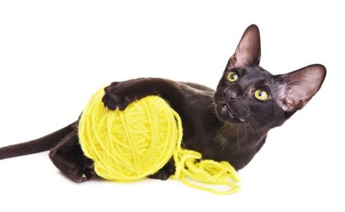 毛糸玉で遊ぶ黒のオリエンタル
