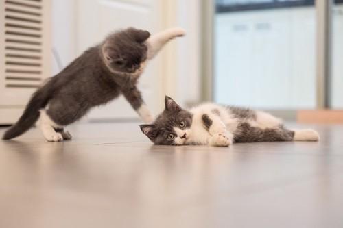 場所を取りあう二匹の猫