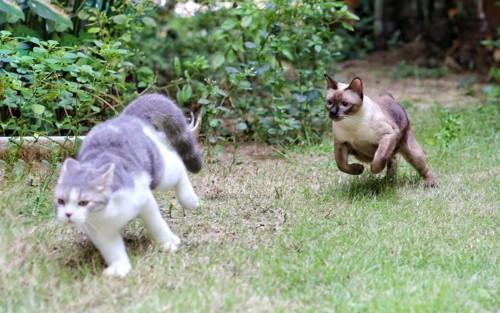 庭を走る猫たち