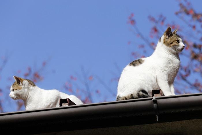屋根の上の兄弟猫