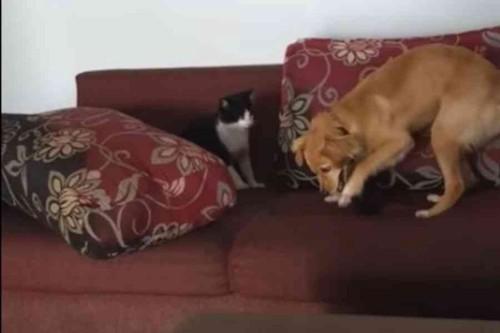 犬をのぞき見る