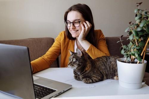 パソコンを見つめる人と猫