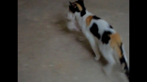 子猫を運ぶ猫
