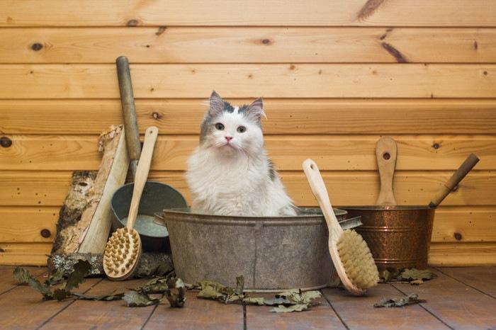 桶に入る猫