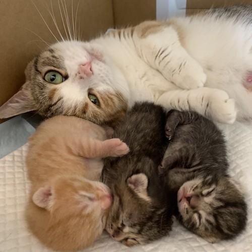 並んで寝る子猫とその向こうのママ猫