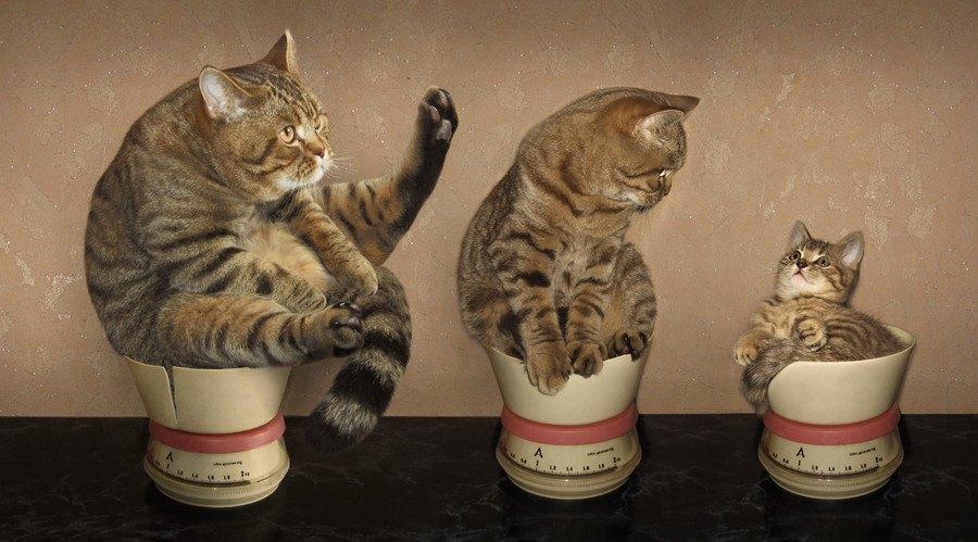 カップに入る猫たち