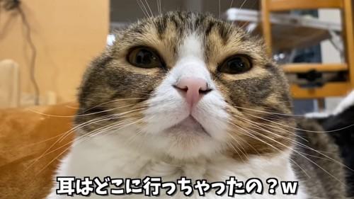 目を開けている猫の顔