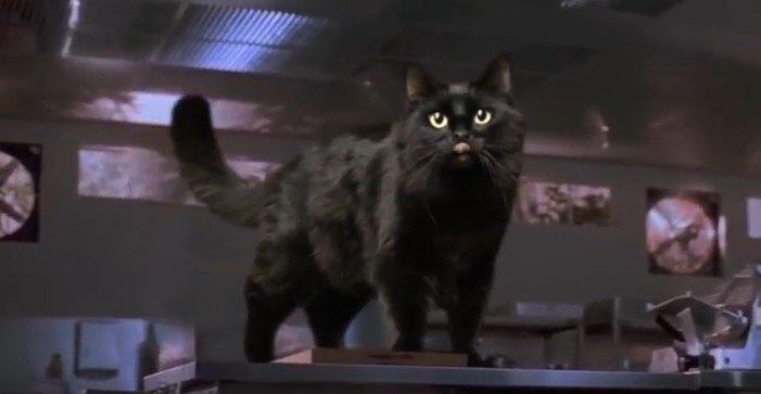 調理台にとび乗るアウル・キティ