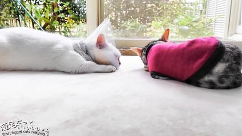 並んで寝る2匹の猫