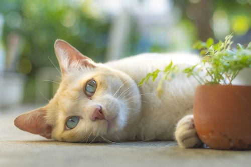 寝転んで鉢植えを前足で押す猫