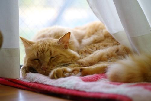 窓際で寝ている猫