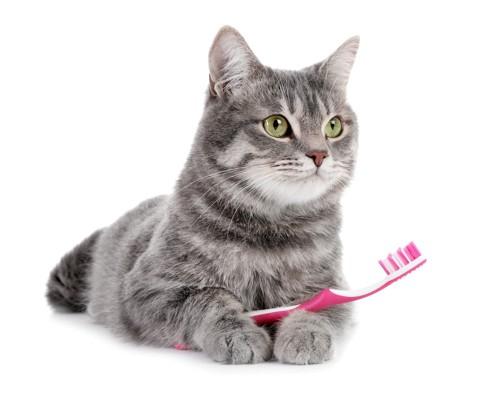 歯ブラシを持つ猫