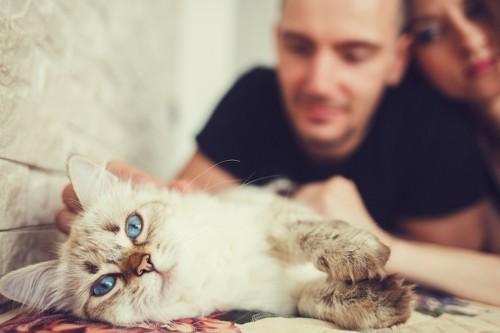 リビングで横になる猫とカップル