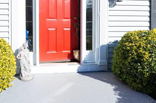 玄関のドアから顔を出す猫