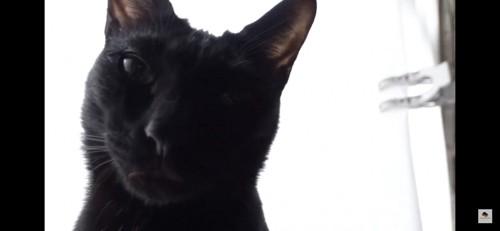 黒猫のドアップ