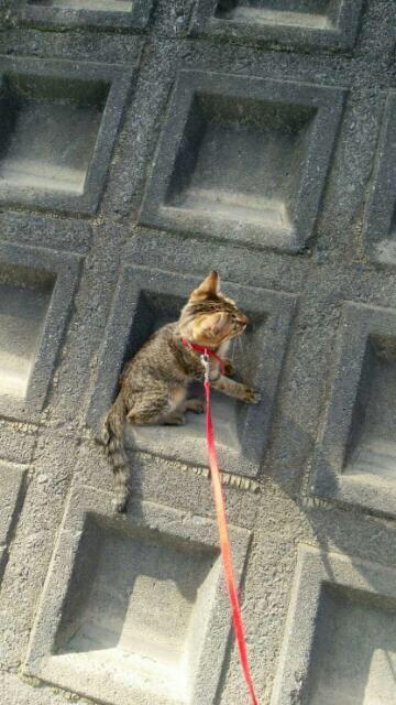 外のブロックに乗る猫