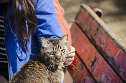 猫を触る女性