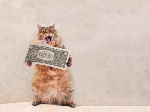 1ドルと猫