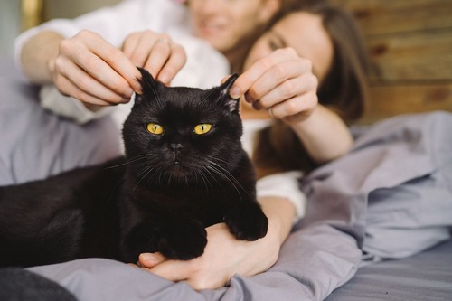 ベッドの上でカップルに耳を引っ張られる猫