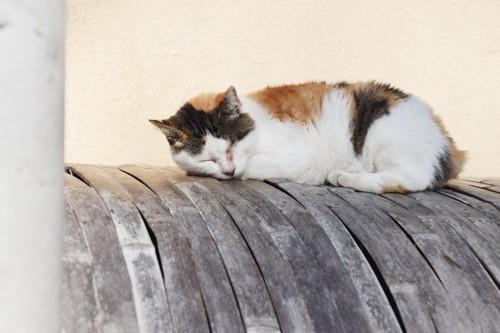 眠るみけ猫