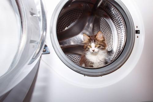 洗濯機の中から顔を出す子猫