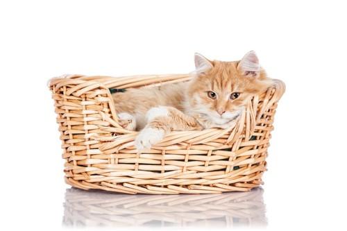 バスケットで寝る子猫