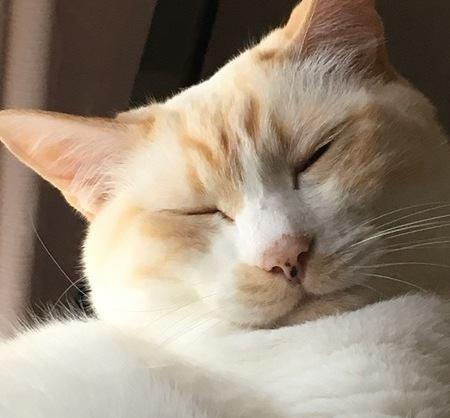 68:こんな美味しそうな寝顔も