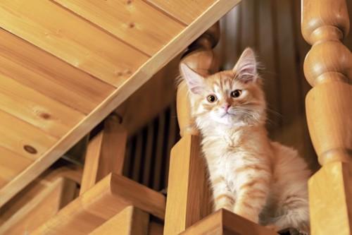 階段に座って見下ろす猫