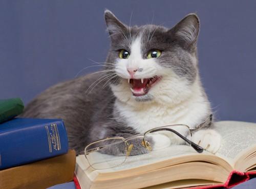 本の上に乗って鳴く猫