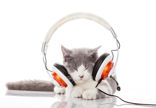 ヘッドフォンをつけている子猫