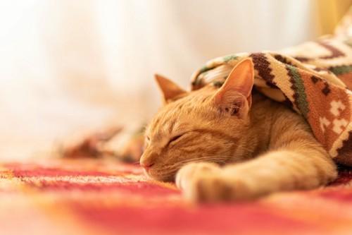 ブランケットに包まって眠っている猫