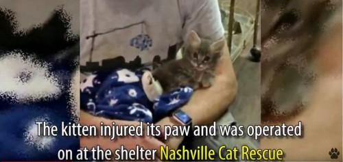 男性の膝の上で毛布にくるまる猫