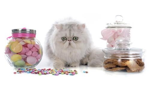 猫と瓶に入ったマシュマロ