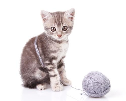 毛糸玉にからまっている子猫