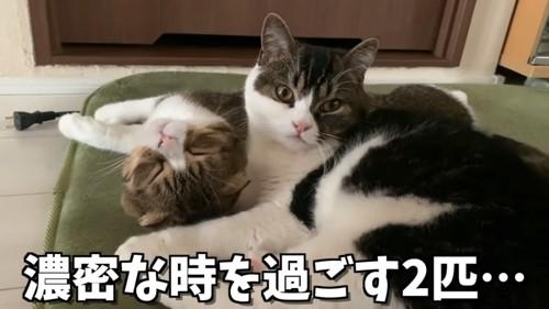 寝転がる2匹の猫