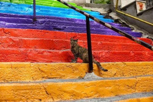 虹の階段に居る猫