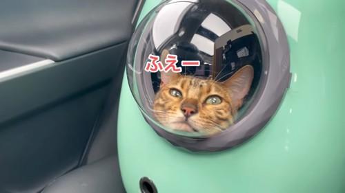 キャリーバッグの中で顎を乗せた姿勢の猫