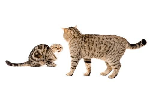 怯える猫と近づく猫
