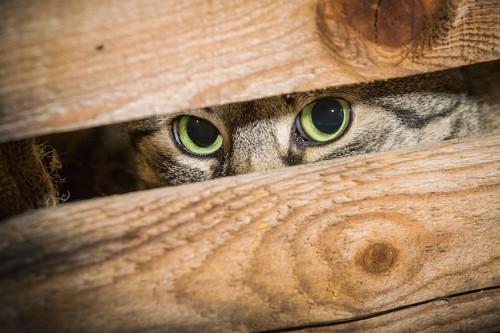 木箱の中に隠れている猫