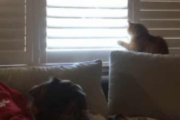 再びブラインドを開ける猫