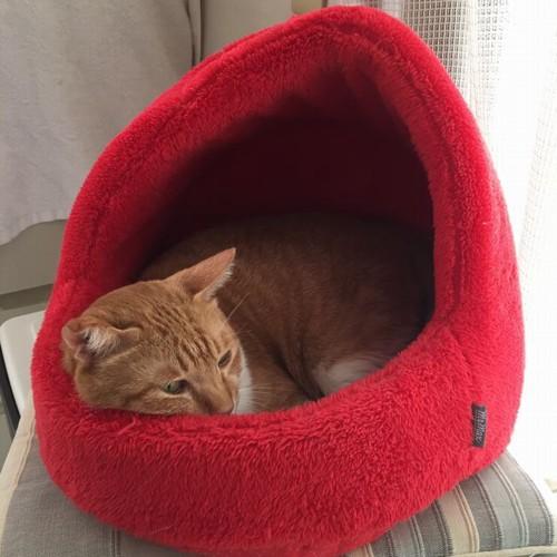 赤いベッドの中