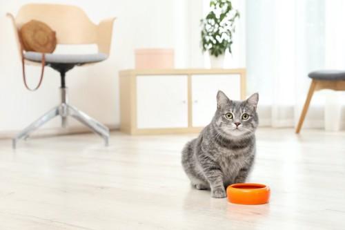 餌入れの前に座ってこちらを見つめる猫