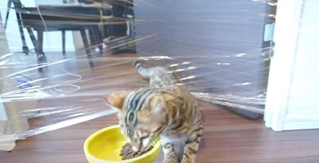 えさを食べる猫