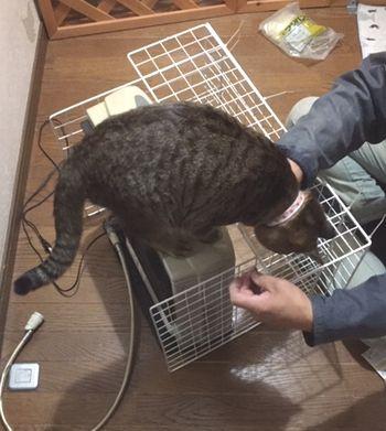 作業中に猫がストーブの上にいる。