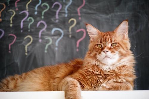 黒板に書かれたたくさんのクエスションマークと不満げな猫