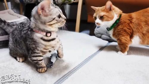 縞模様の猫と茶白猫