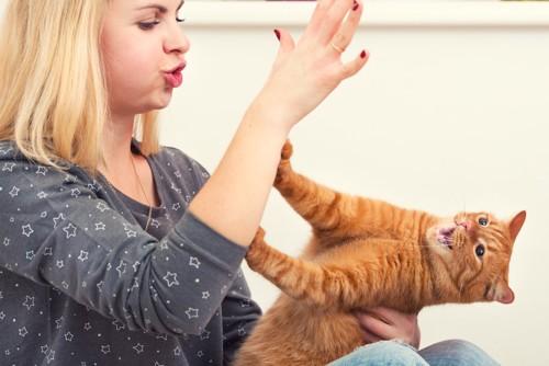 女性の手を手で押さえる茶トラ猫