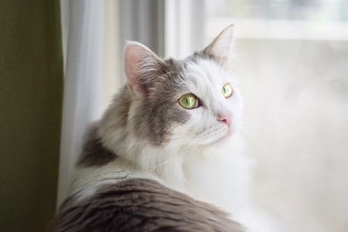 窓辺で振り向く猫