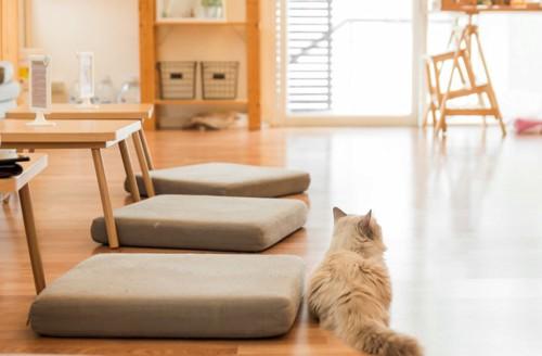 猫とフローリング