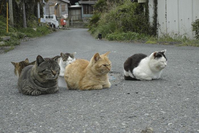 田代島の猫たち